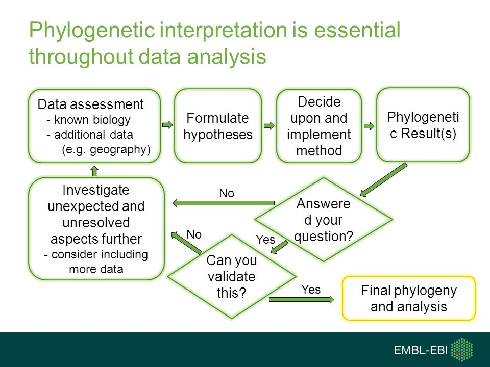 Phylogenetic interpretation is essential throughout data analysis
