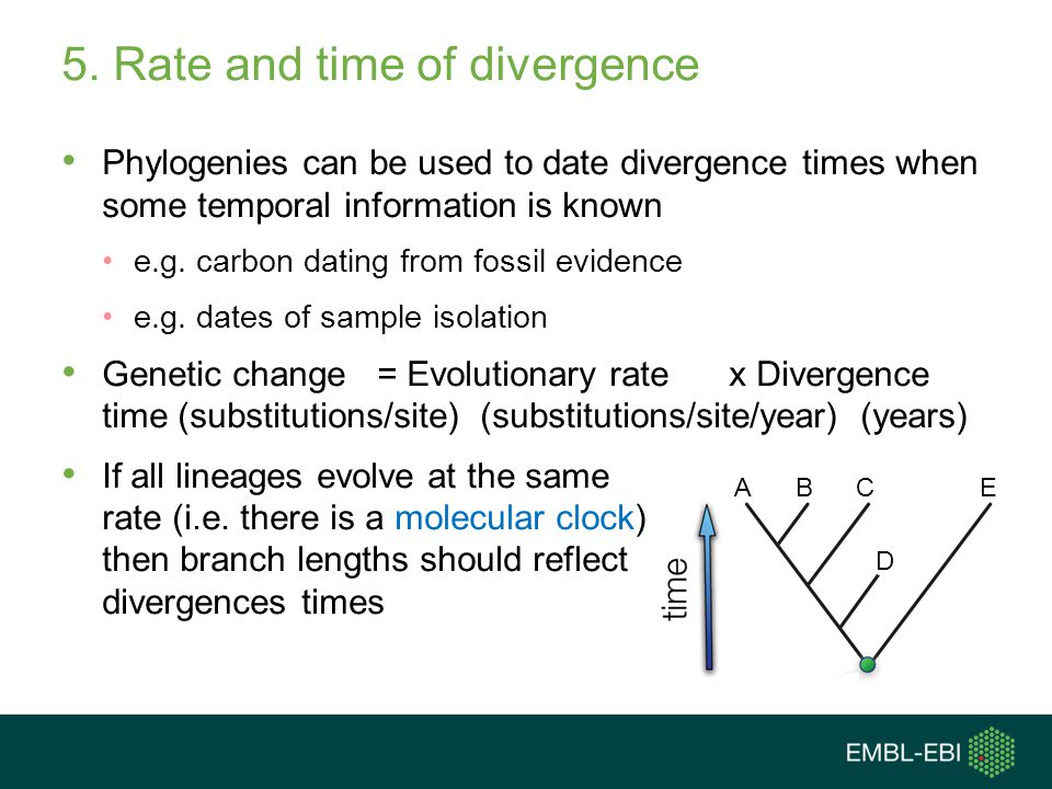 5. Rate and time of divergence