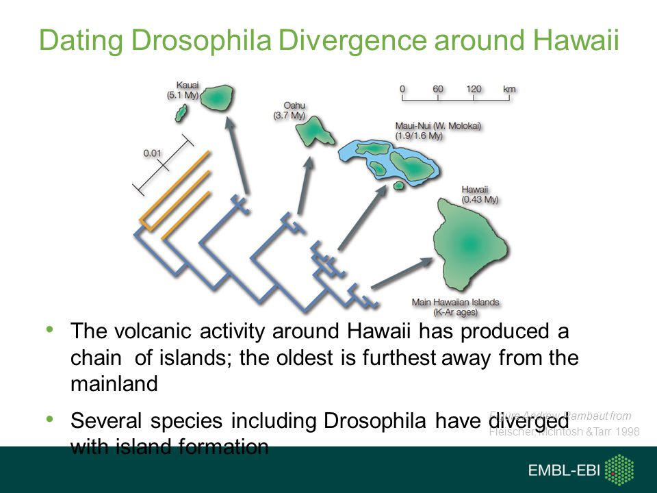 Dating Drosophila Divergence around Hawaii