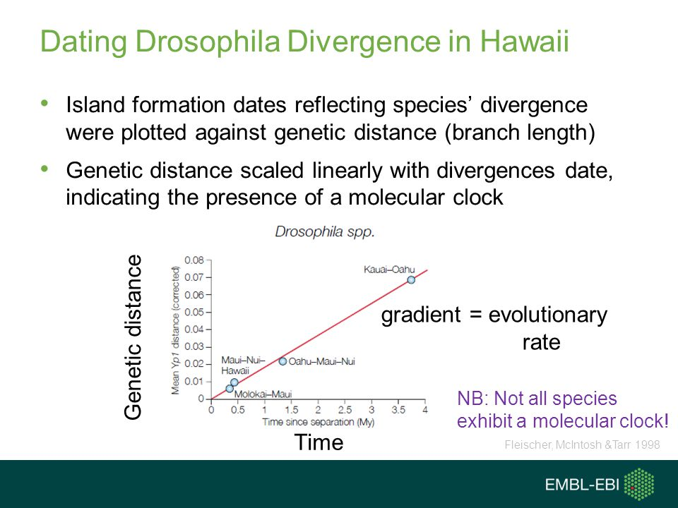 Dating Drosophila Divergence in Hawaii