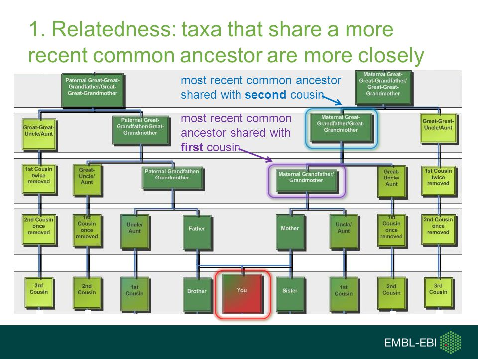 1. Relatedness: taxa that share a more recent common ancestor are more closely related