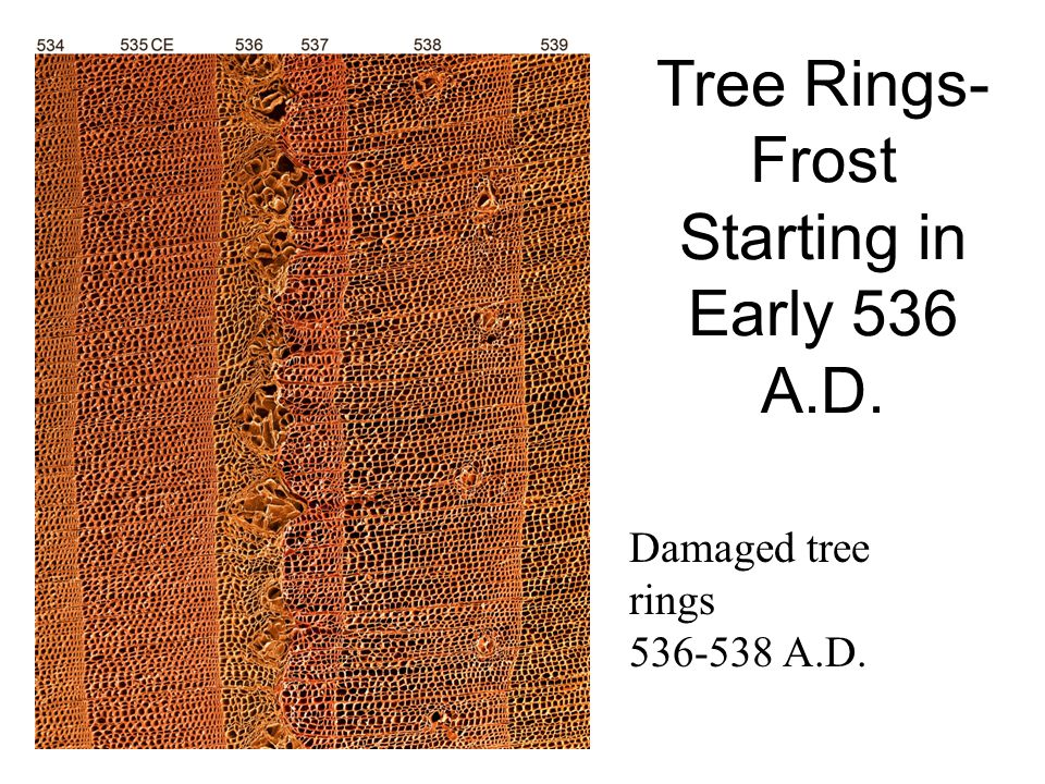 Tree Rings-Frost Starting in Early 536 A.D.