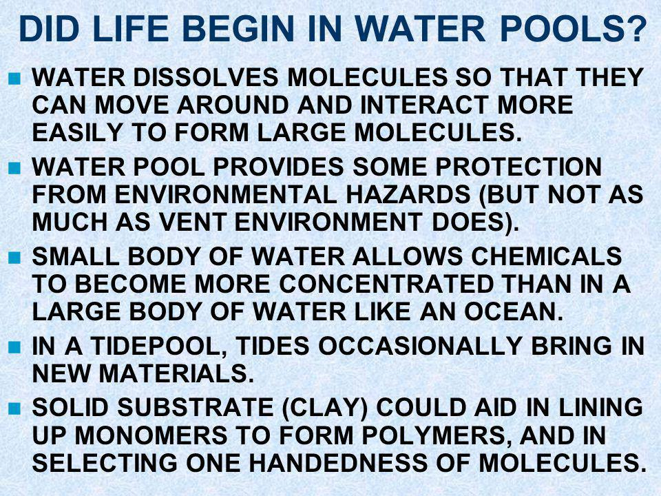 DID LIFE BEGIN IN WATER POOLS