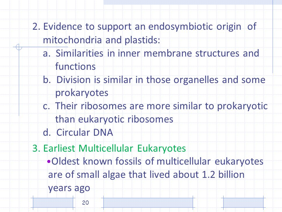 2. Evidence to support an endosymbiotic origin. of