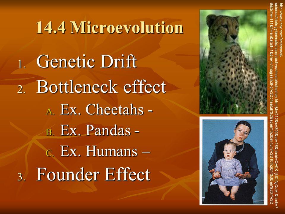 Genetic Drift Bottleneck effect Founder Effect 14.4 Microevolution