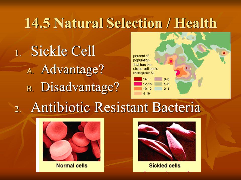 14.5 Natural Selection / Health