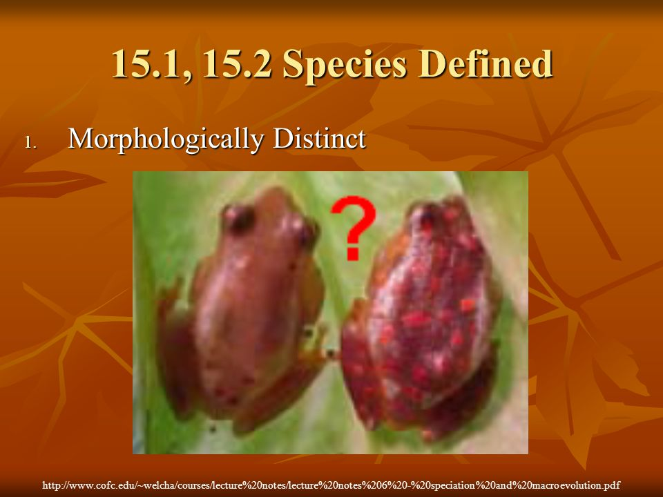 15.1, 15.2 Species Defined Morphologically Distinct