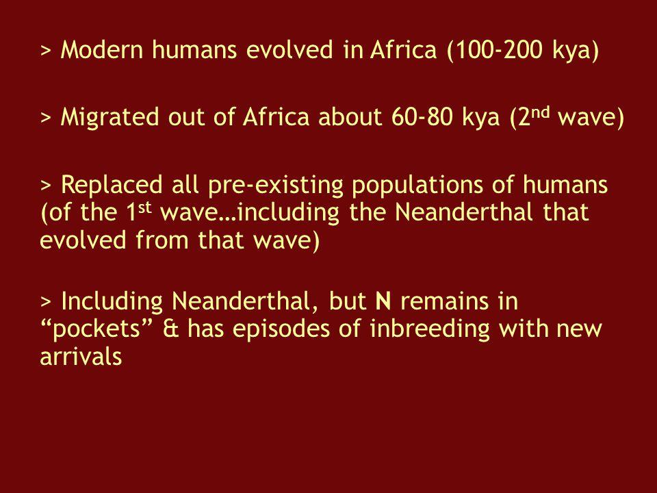 > Modern humans evolved in Africa (100-200 kya)