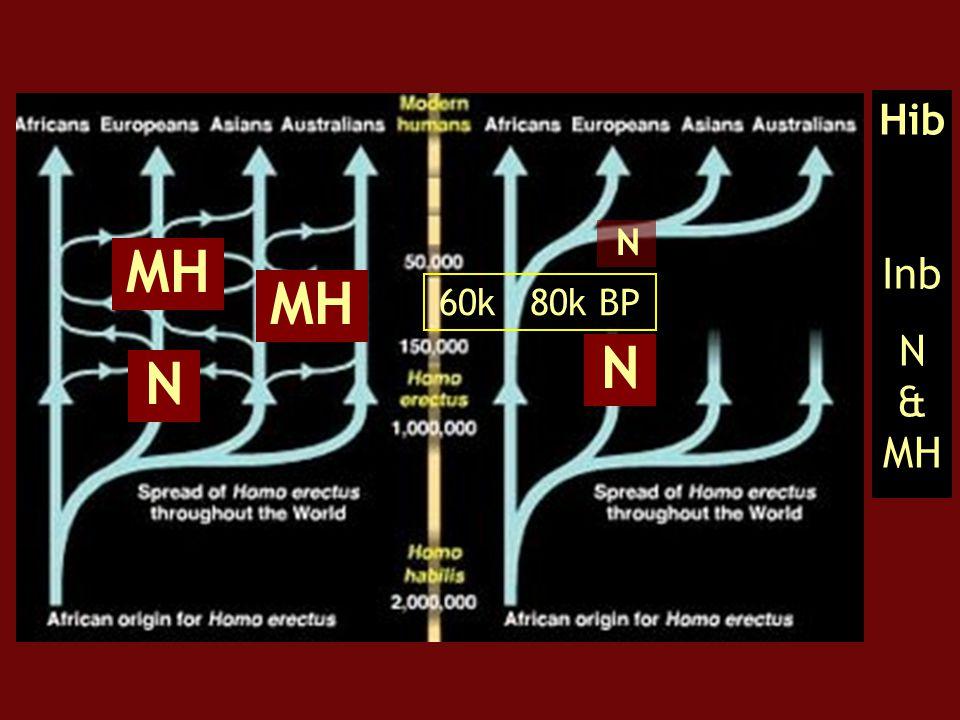 Hib Inb N & MH N MH MH 60k 80k BP N N