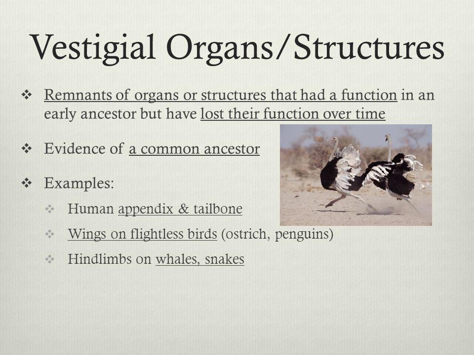 Vestigial Organs/Structures
