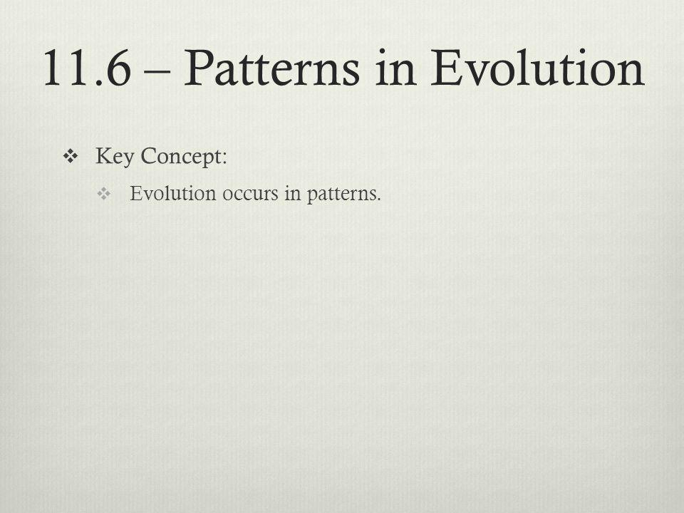 11.6 – Patterns in Evolution