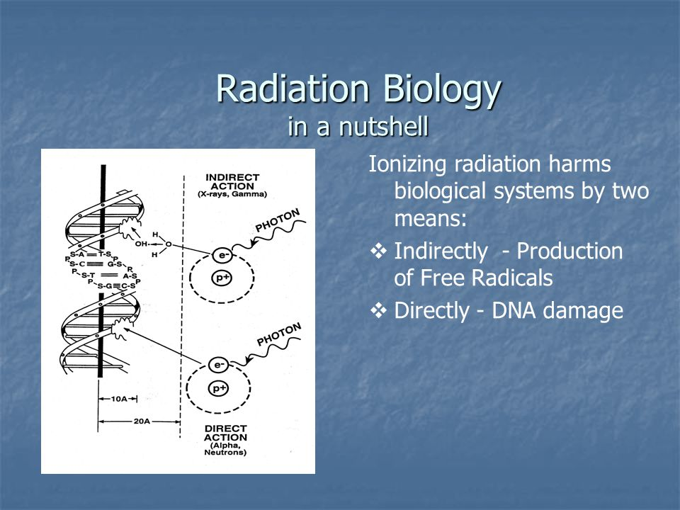 Radiation Biology in a nutshell