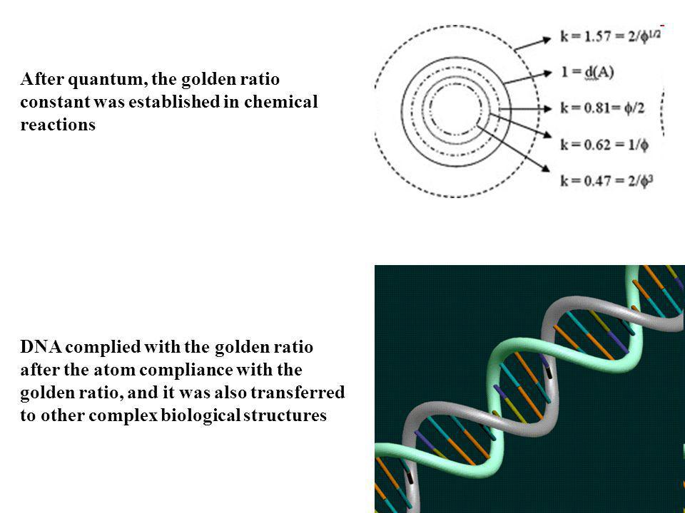 After quantum, the golden ratio constant was established in chemical reactions