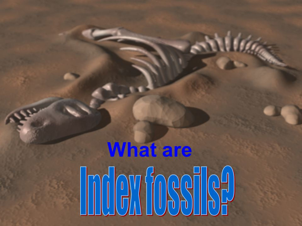 What are Index fossils