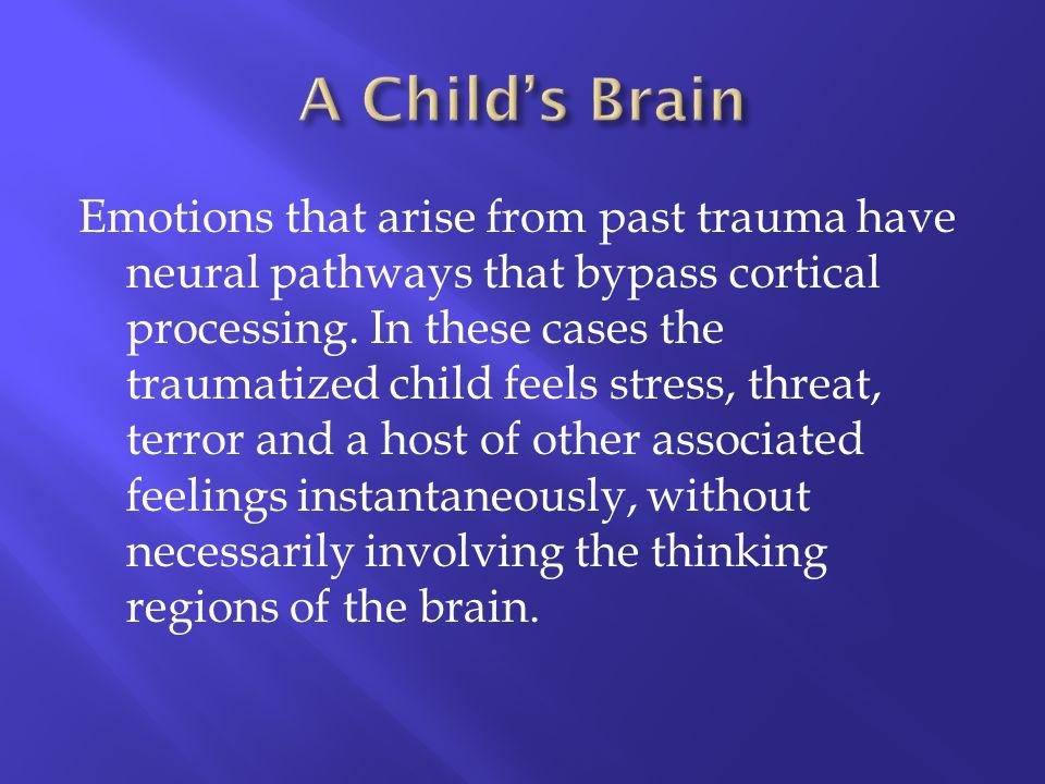 A Child's Brain