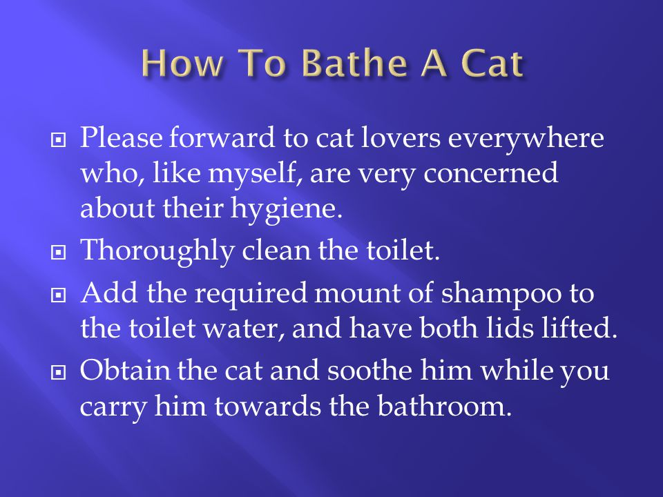 How To Bathe A Cat Please forward to cat lovers everywhere who, like myself, are very concerned about their hygiene.