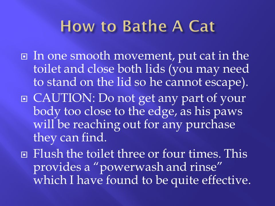 How to Bathe A Cat In one smooth movement, put cat in the toilet and close both lids (you may need to stand on the lid so he cannot escape).