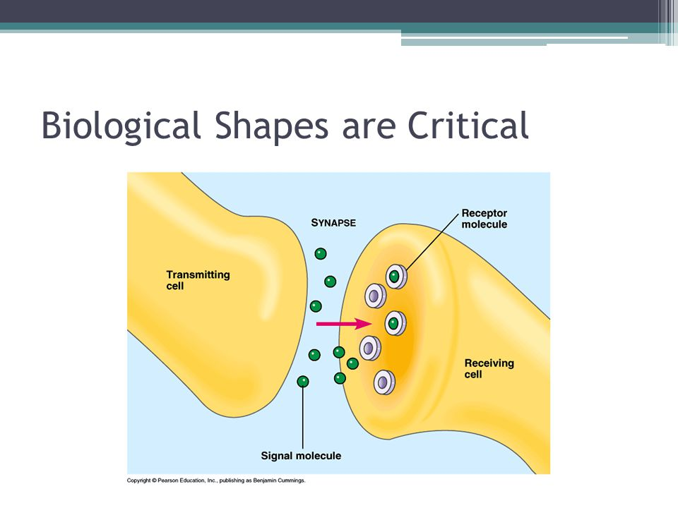 Biological Shapes are Critical