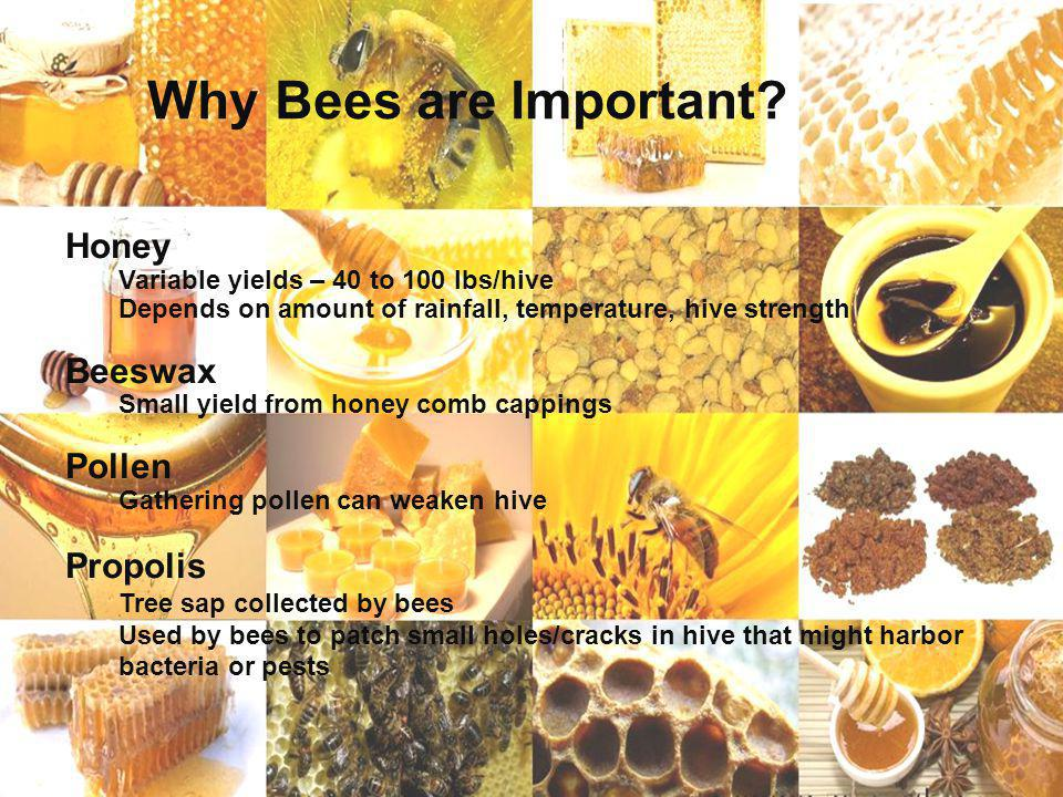 Why Bees are Important Honey Beeswax Pollen Propolis