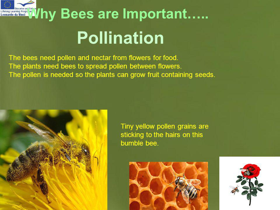 Pollination Why Bees are Important…..