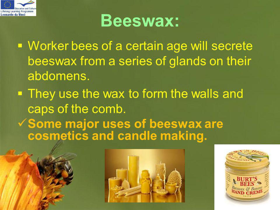 Beeswax: Worker bees of a certain age will secrete beeswax from a series of glands on their abdomens.