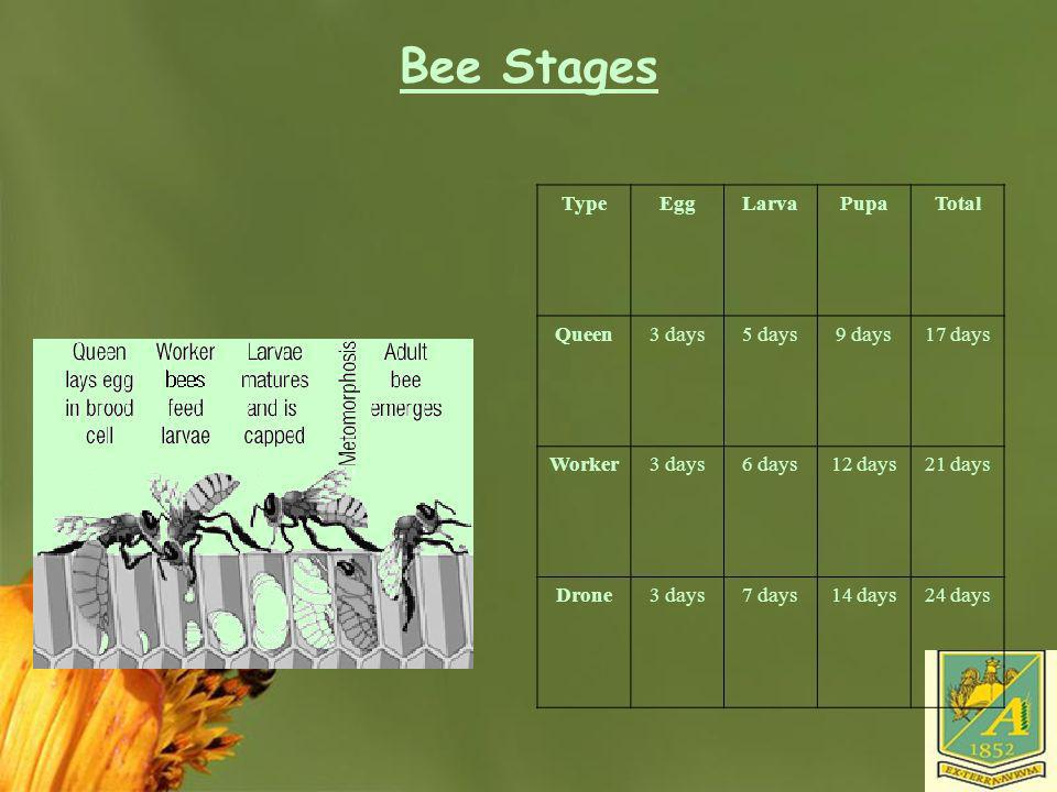 Bee Stages Type Egg Larva Pupa Total Queen 3 days 5 days 9 days