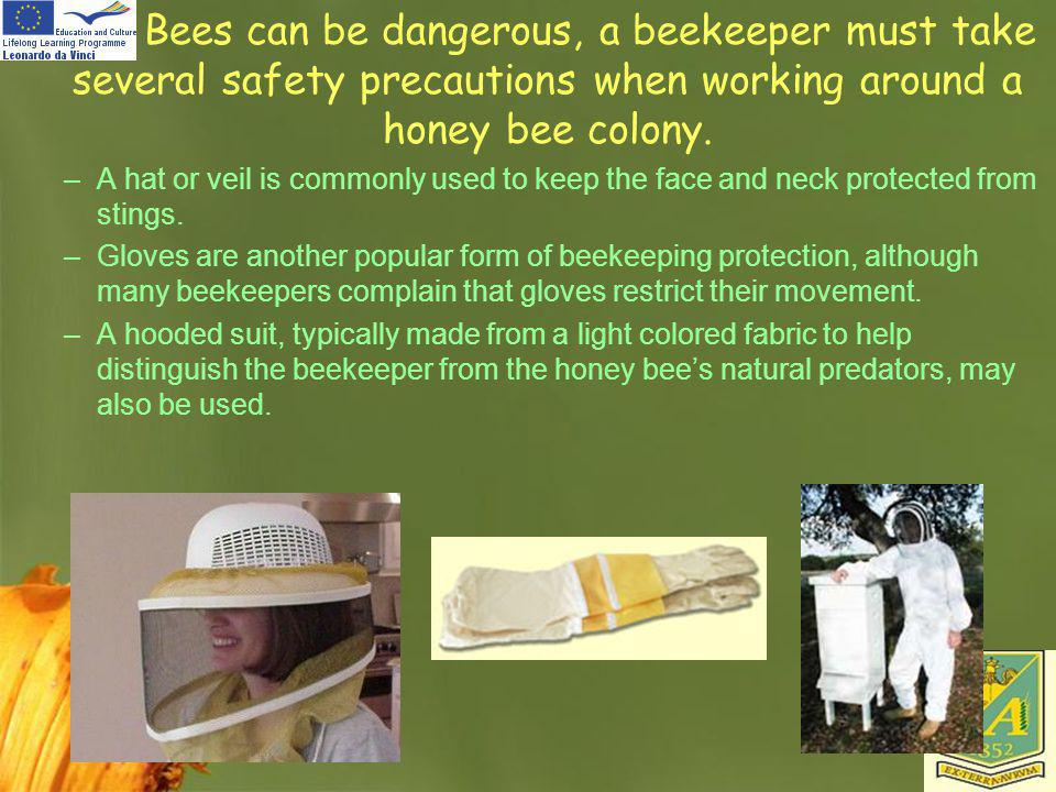 Bees can be dangerous, a beekeeper must take several safety precautions when working around a honey bee colony.