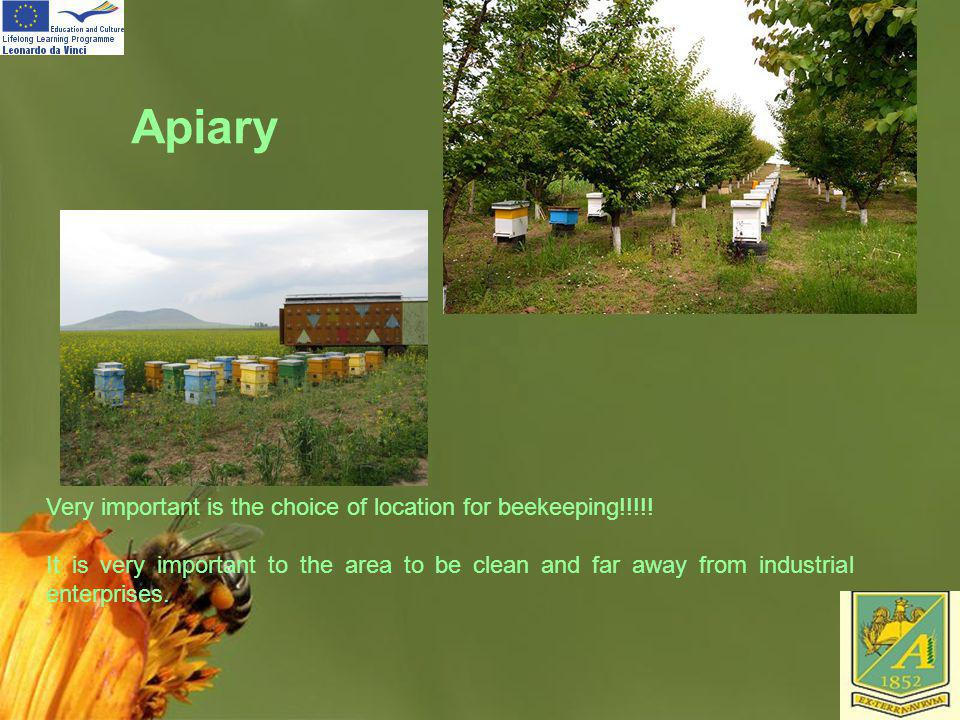 Apiary Very important is the choice of location for beekeeping!!!!!