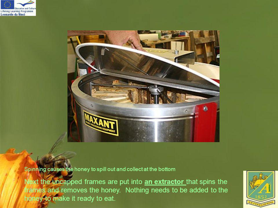 Spinning causes the honey to spill out and collect at the bottom