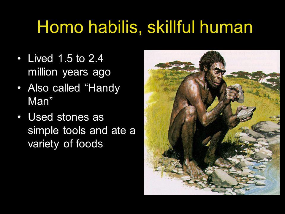 Homo habilis, skillful human