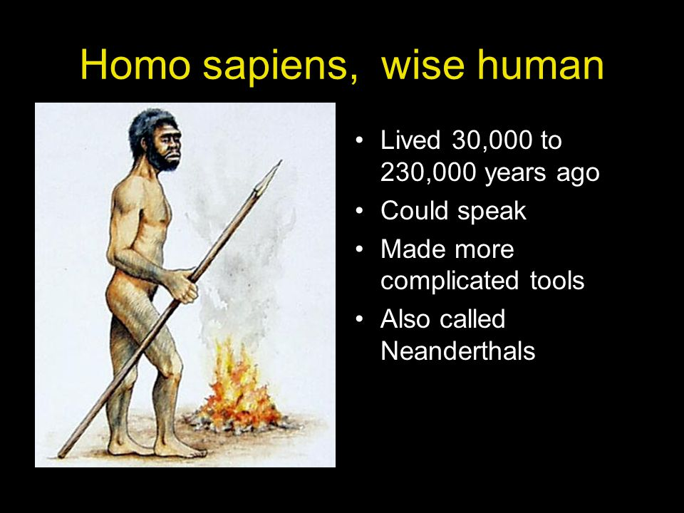 Homo sapiens, wise human
