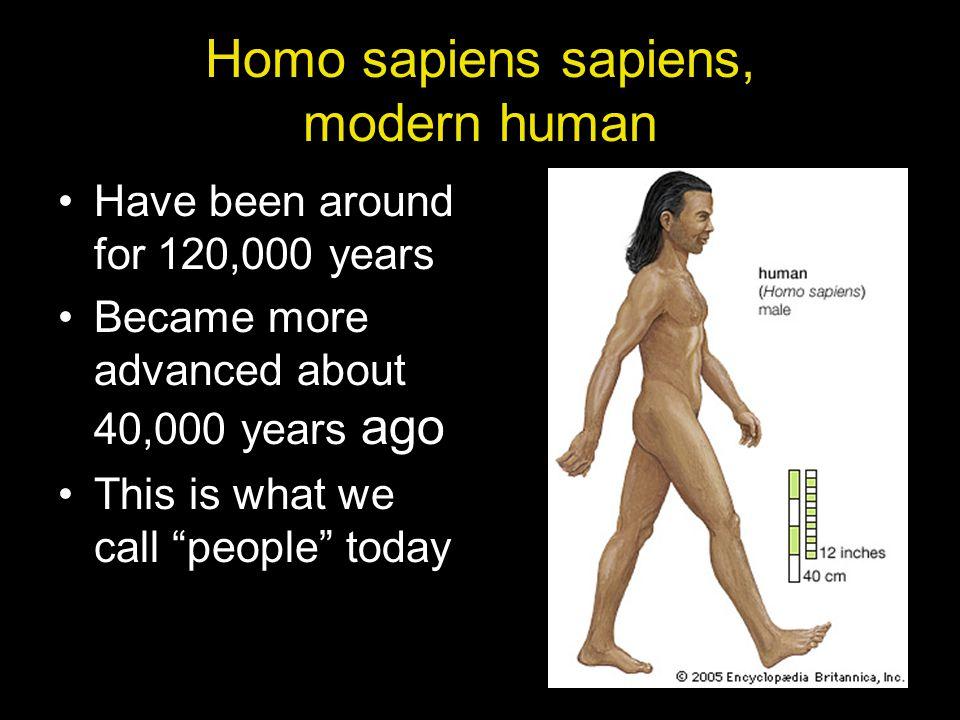 Homo sapiens sapiens, modern human