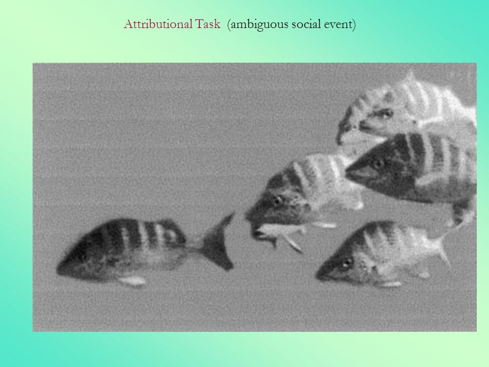 Attributional Task (ambiguous social event)