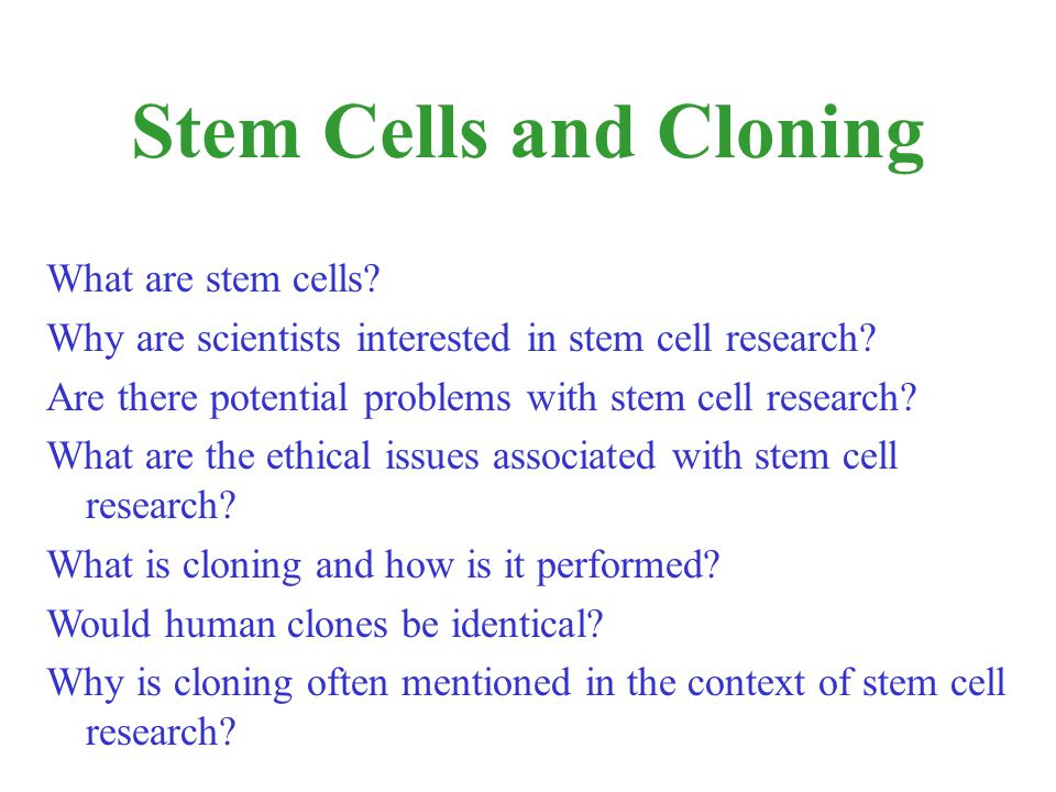 Stem Cells and Cloning What are stem cells