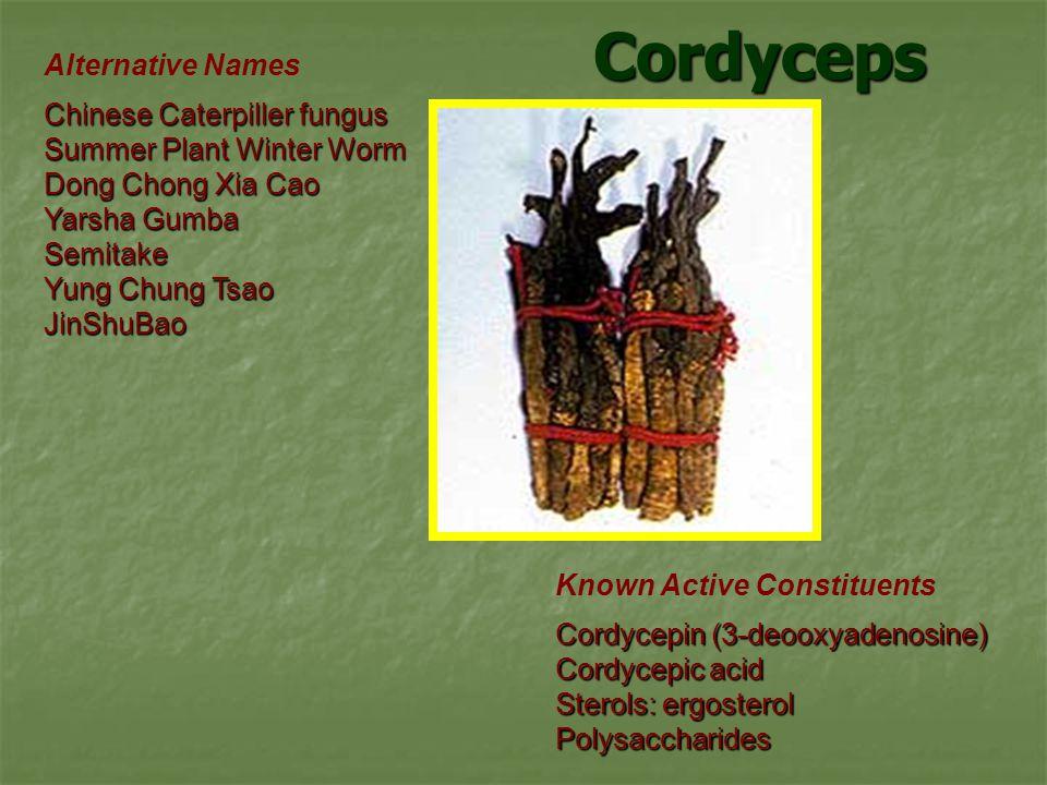 Cordyceps Alternative Names