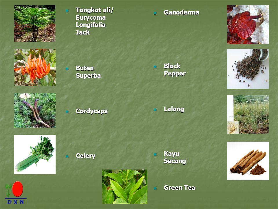 Tongkat ali/ Eurycoma Longifolia Jack