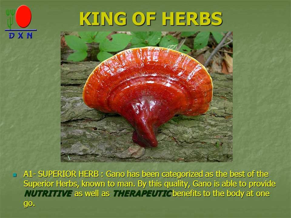 KING OF HERBS