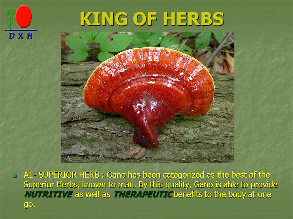 KING OF HERBS