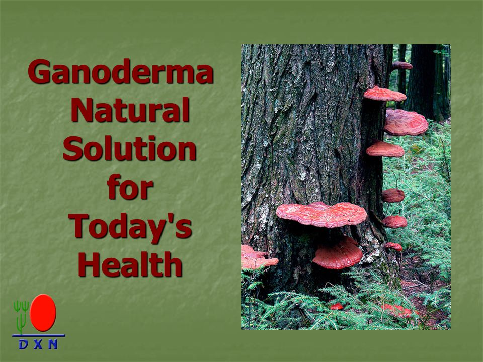 Ganoderma Natural Solution for Today s Health