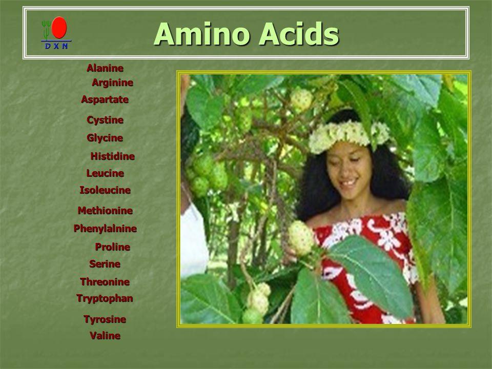 Amino Acids Alanine Arginine Aspartate Cystine Glycine Histidine