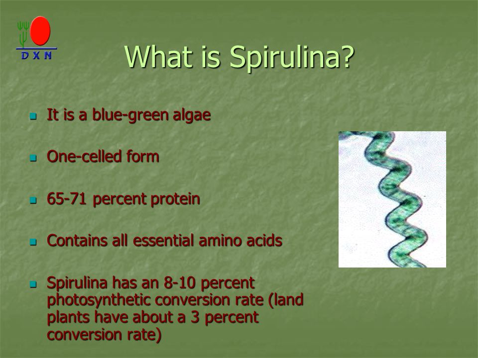 What is Spirulina It is a blue-green algae One-celled form