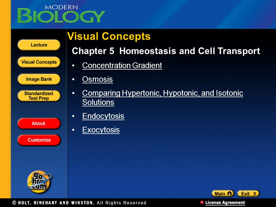 Visual Concepts Chapter 5 Homeostasis and Cell Transport