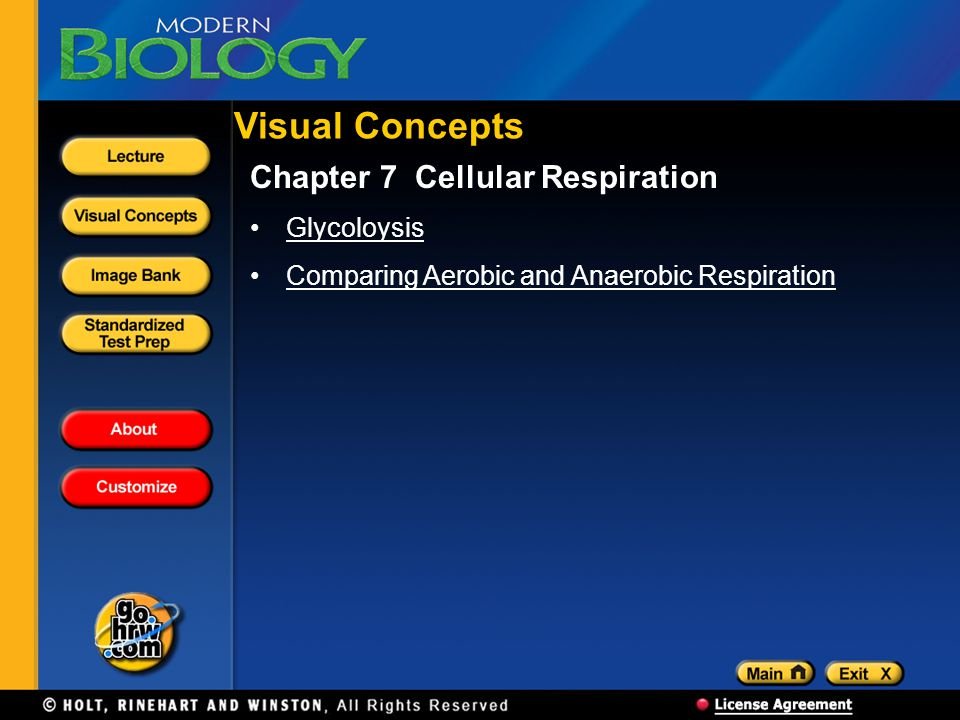 Visual Concepts Chapter 7 Cellular Respiration Glycoloysis