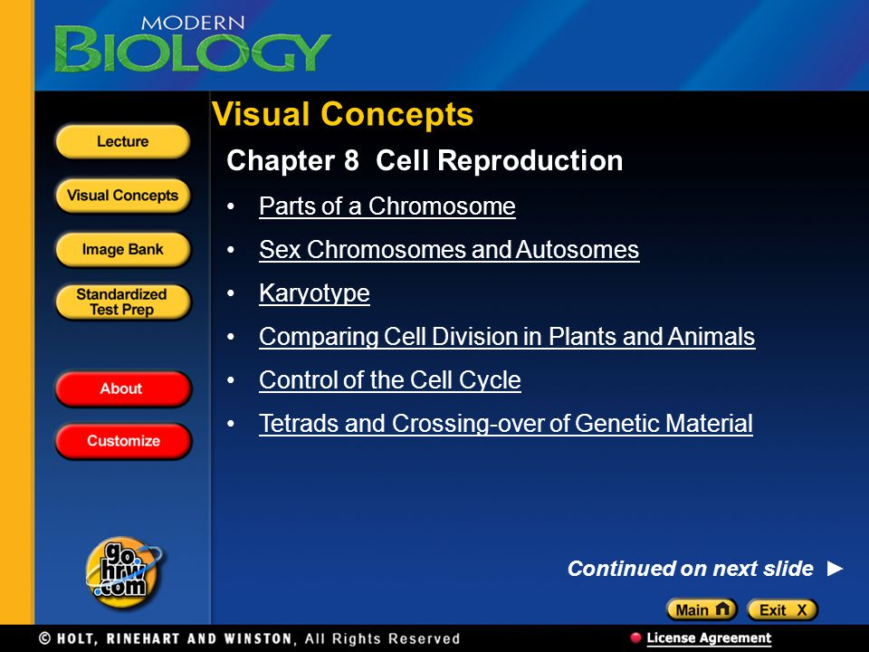Visual Concepts Chapter 8 Cell Reproduction Parts of a Chromosome