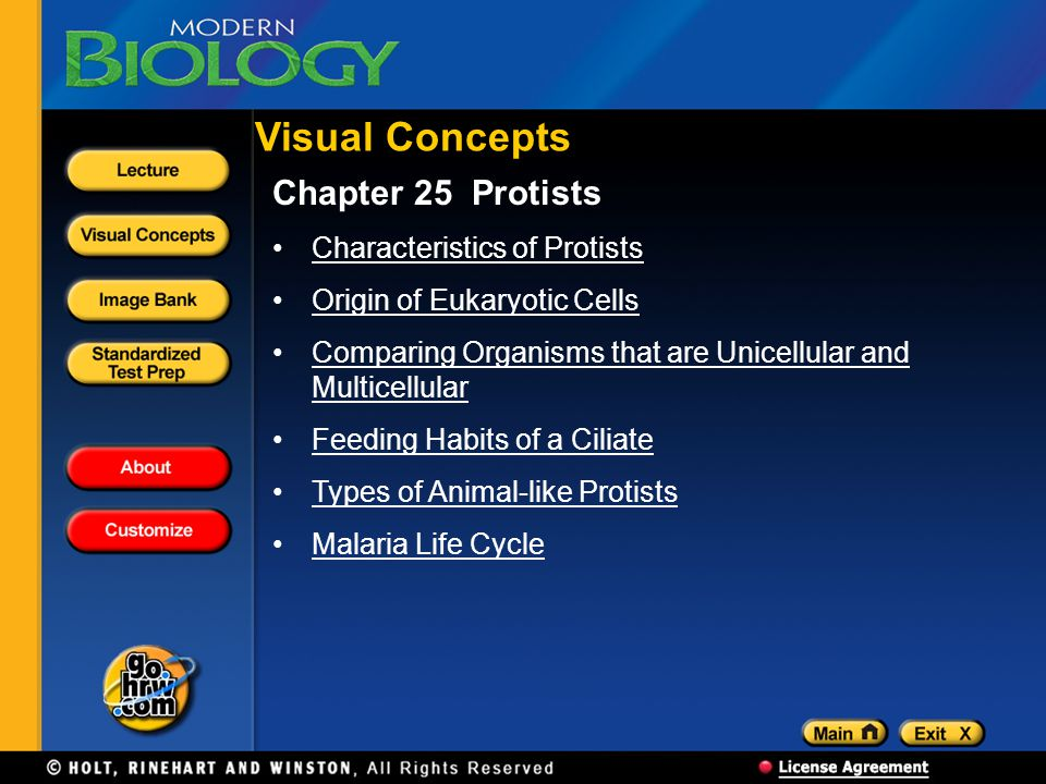 Visual Concepts Chapter 25 Protists Characteristics of Protists