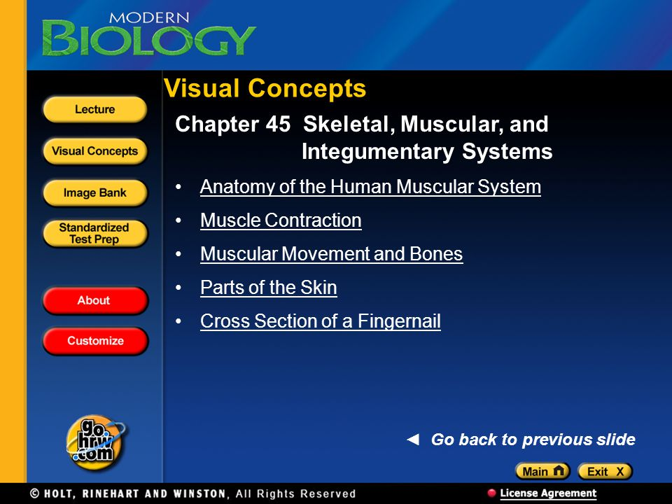 Visual Concepts Chapter 45 Skeletal, Muscular, and Integumentary Systems. Anatomy of the Human Muscular System.