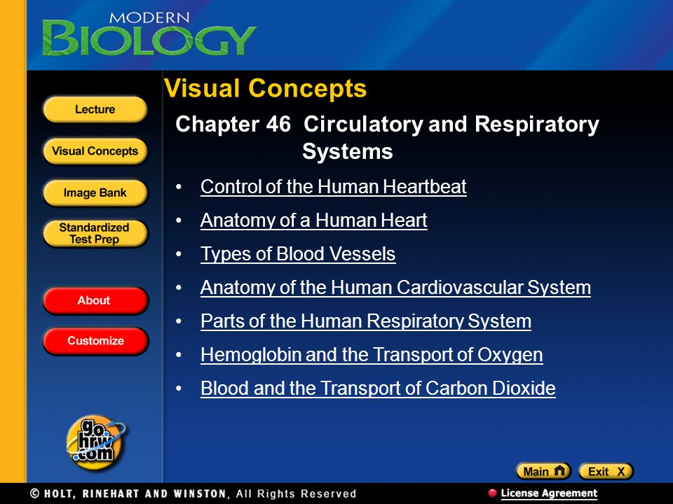 Visual Concepts Chapter 46 Circulatory and Respiratory Systems