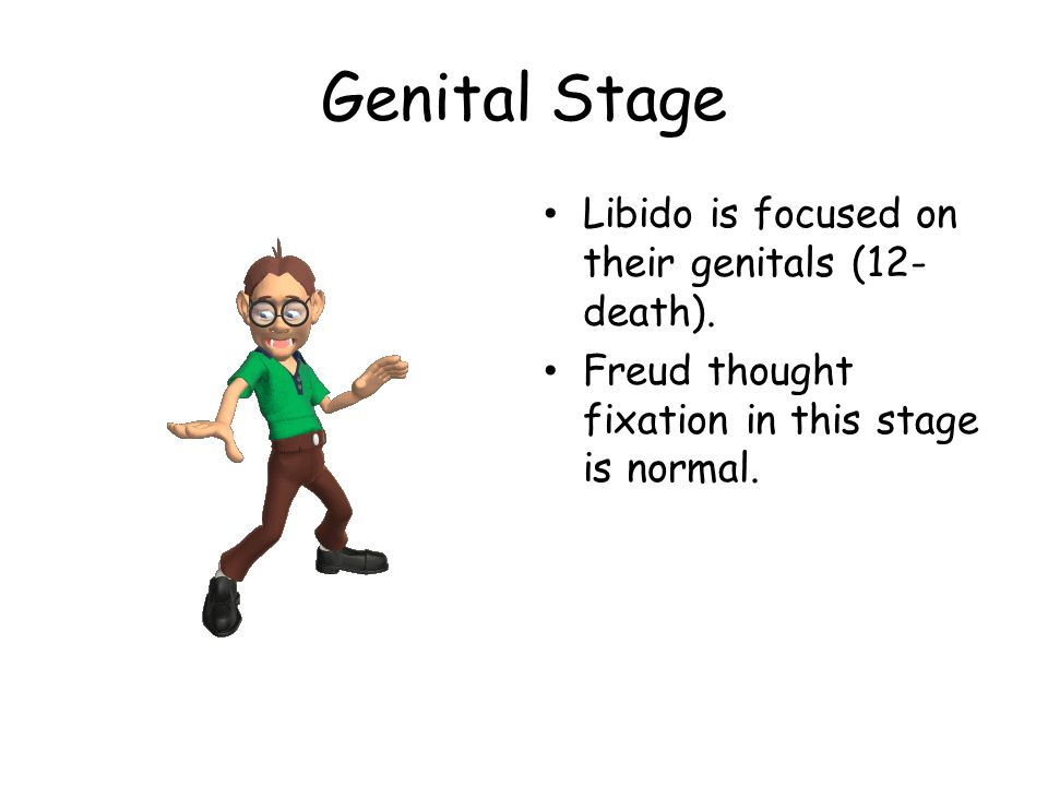 Genital Stage Libido is focused on their genitals (12-death).