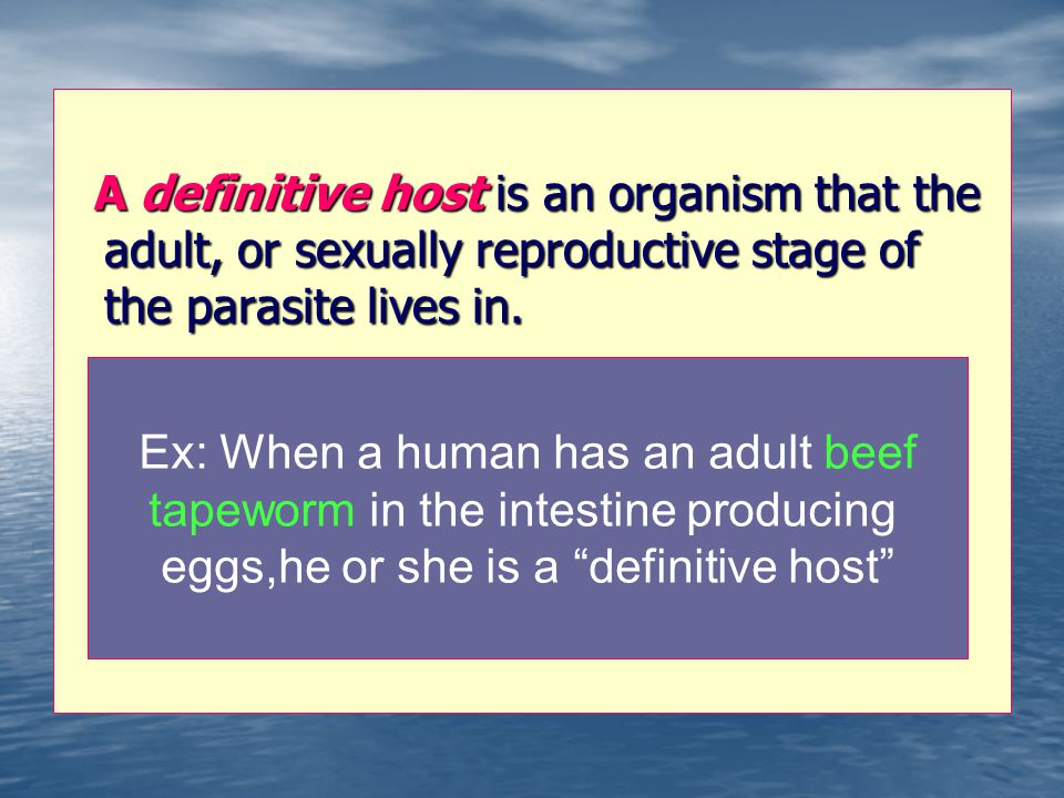 Ex: When a human has an adult beef tapeworm in the intestine producing