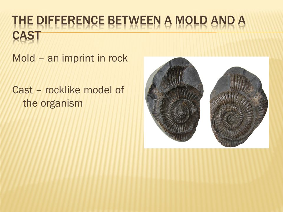 The difference between a mold and a cast